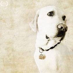 Adria Ellis - 1st Place, Animals