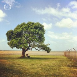 Federico Racchi -  - 1st Place, Trees