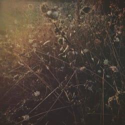 AnaLeko01-Seasons