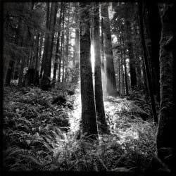 ChakaTaylor10-Nature