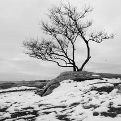 ChrisStern07-Nature