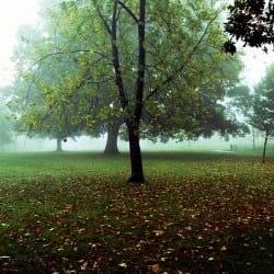 DanielHume01-TreesSeasons