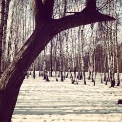 DariaKurbatova03-seasons