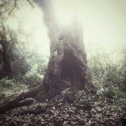 GiulianoDelGatto01-Nature