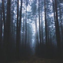 MariyaMuravleva01-nature
