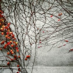 MichalSzklanowski02-Seasons