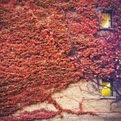 RoseSauquillo07-Seasons