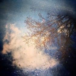 XueyingDuanmu03-Nature